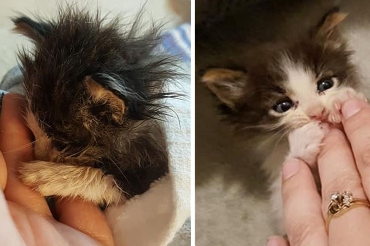Woman Fought to Save Small Kitten from the Brink - He's Still Tiny But Mighty