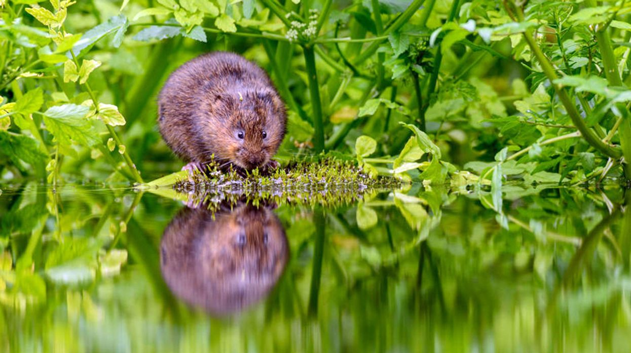 83% Decline of Freshwater Animals Underscores Need to Protect and Restore Freshwaters