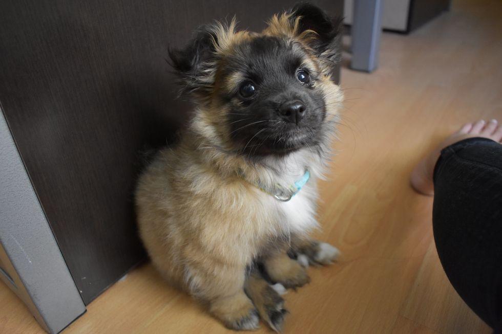 Meet My Lovely Puppy