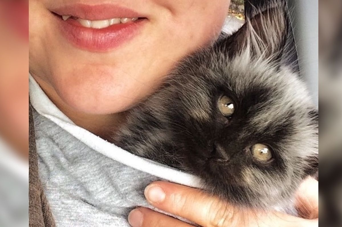 Rescued Kitten With Unusual Colored Fur, Grows Back His True Colors
