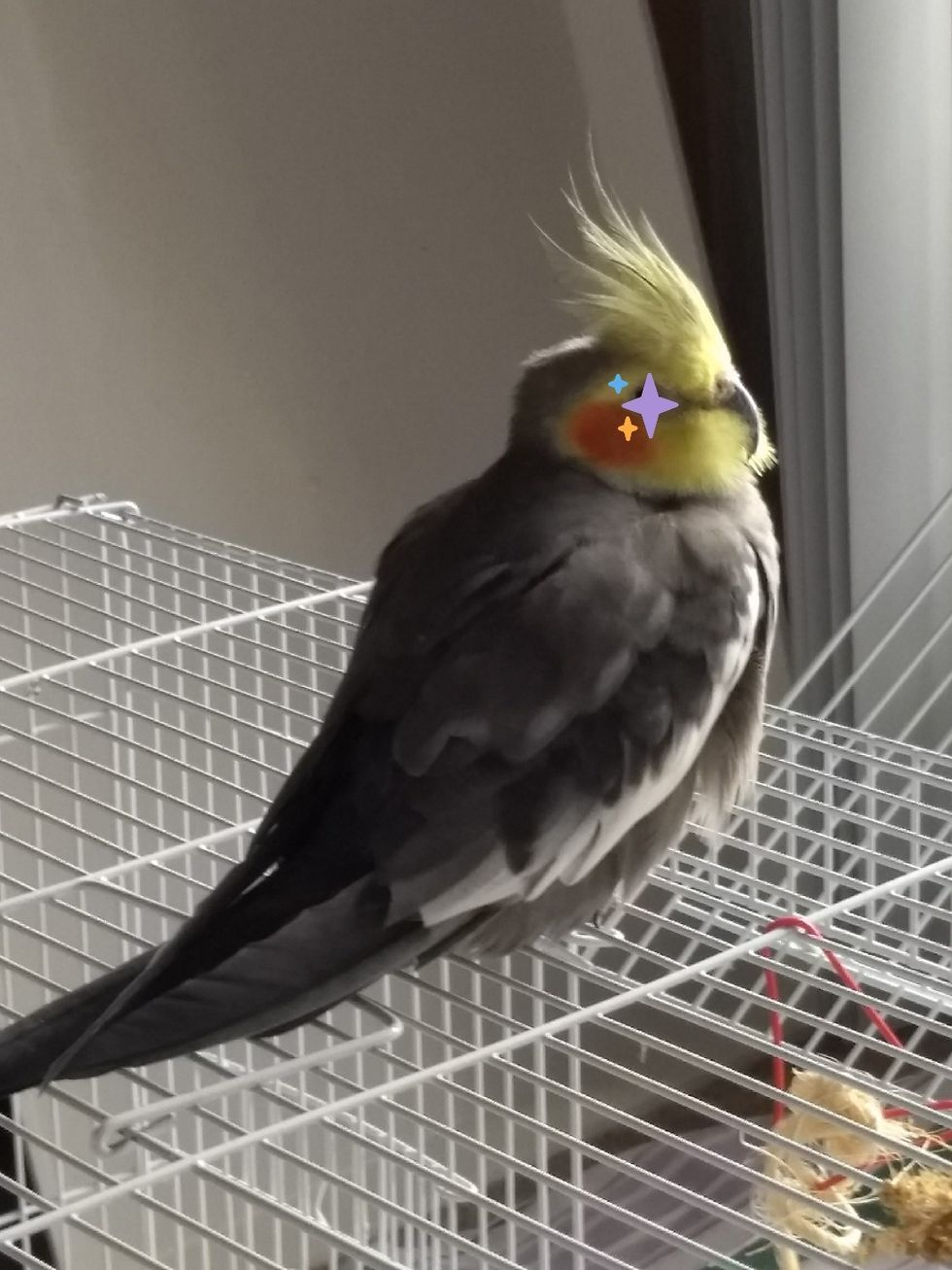 My Fussy Cockatiel Showed Me That If You Really Love Someone, Love Them How They Want You To