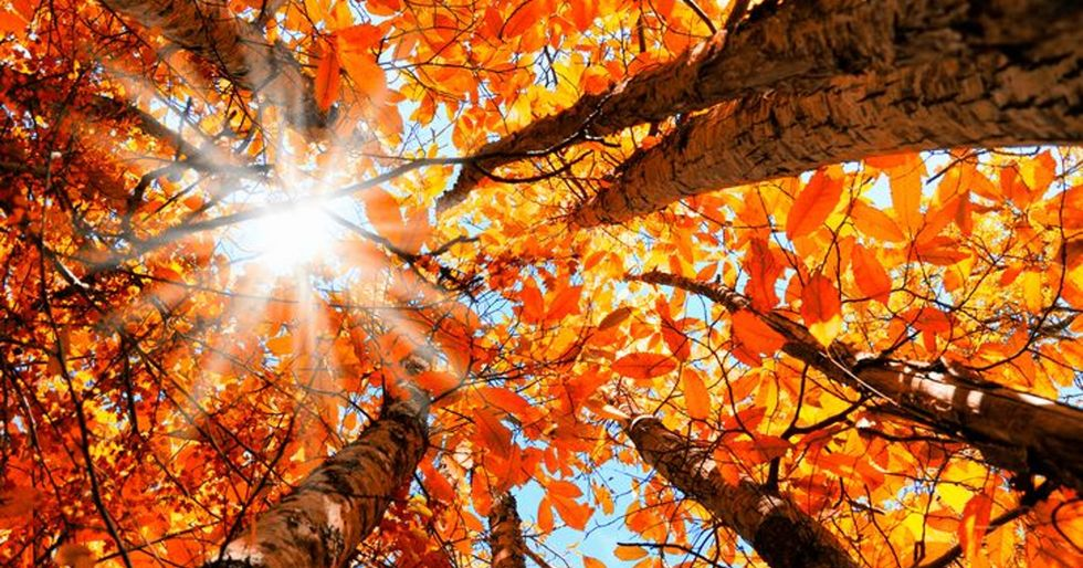 10 Reasons Why Fall is the Best Season
