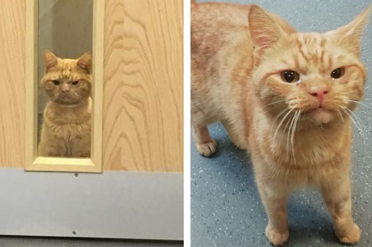 Cat with Grumpy Face, Found Wandering Outside, Has a Good Reason for His Displeasure