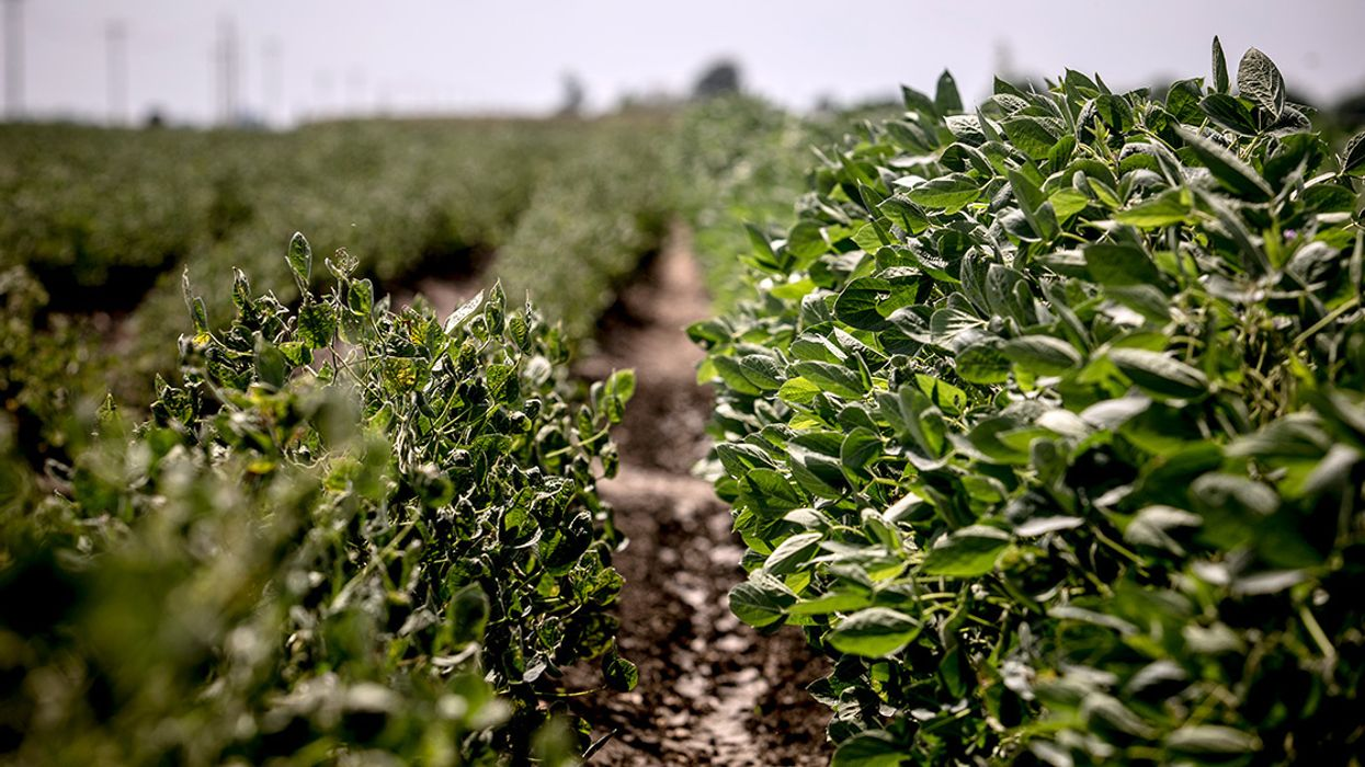 Trump's EPA Sides With Monsanto, Extends Dicamba 2 More Years