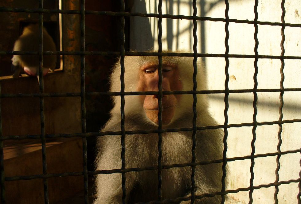 Depressed Animals Are In Deranged Zoos And We Need To Stop Supporting It