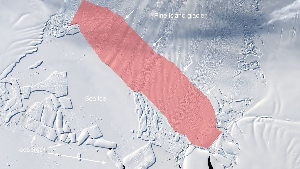 The iceberg that is poised to calve off Pine Island Glacier is about 115 square miles (300 square kilometers).