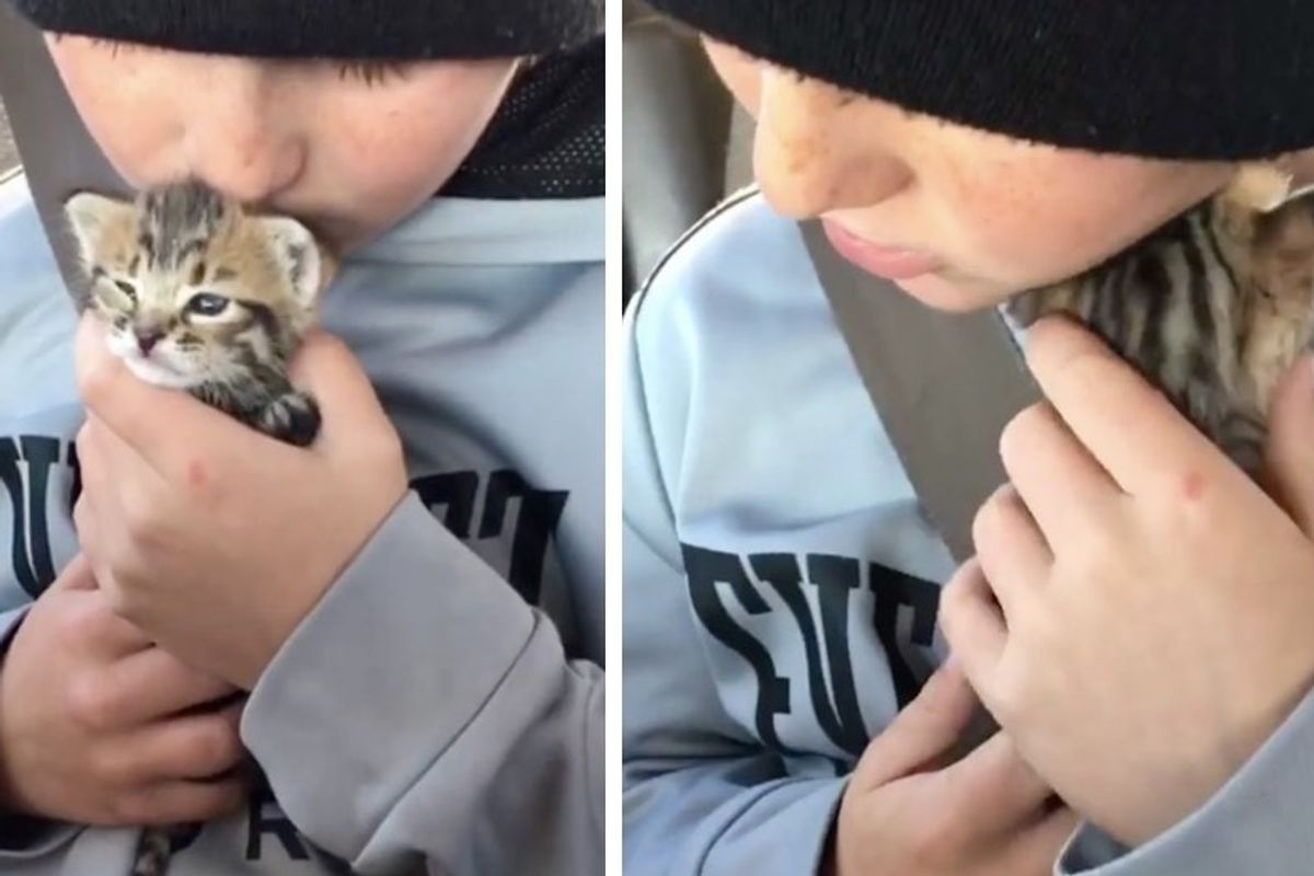 10-year-old Boy Calms Crying Abandoned Kitten and Finds Her a New Cat Mom.