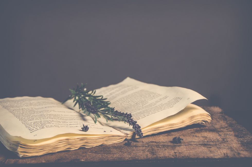 https://www.pexels.com/photo/sepia-photography-of-green-plant-on-top-of-open-book-810029/