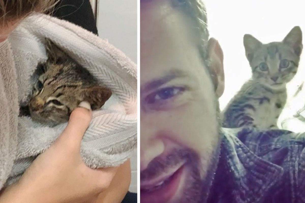 Kitten Found Crawling on Sidewalk, Has His Life Turned Around and Won't Stop Purring