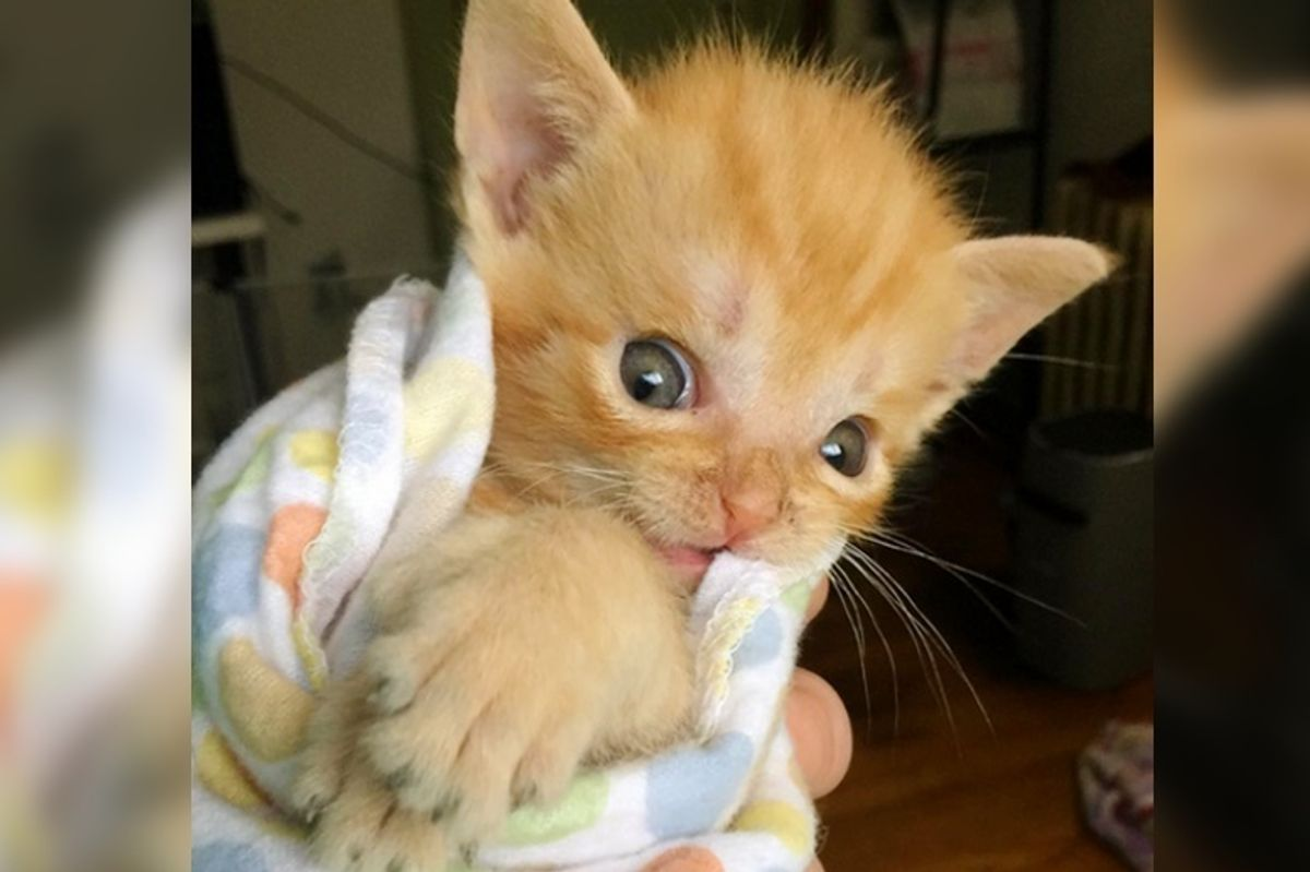 Kitten Saved from Streets Became Smallest Kitty to Receive Life-saving Surgery
