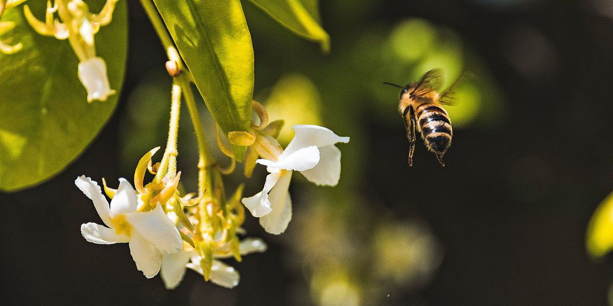 Dow wants to bolster use of a pesticide shown to hurt bees' reproduction
