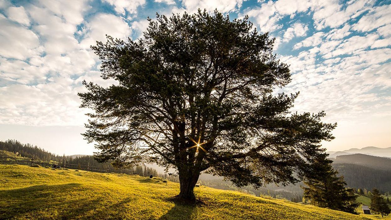 Humanity Chopping Down Tree of Life, New Research Warns
