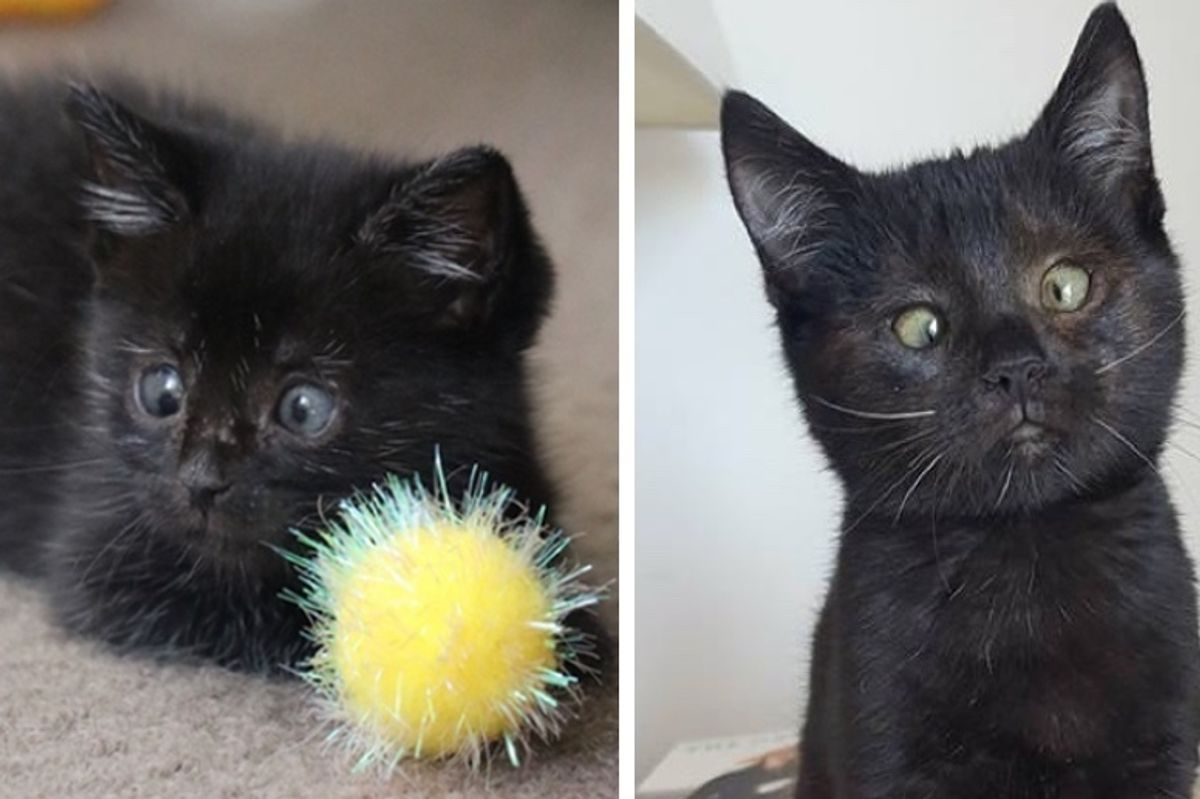 Kitten Found in Garden Gets Help to See Again and Reveals Her Adorable Crossed Eyes
