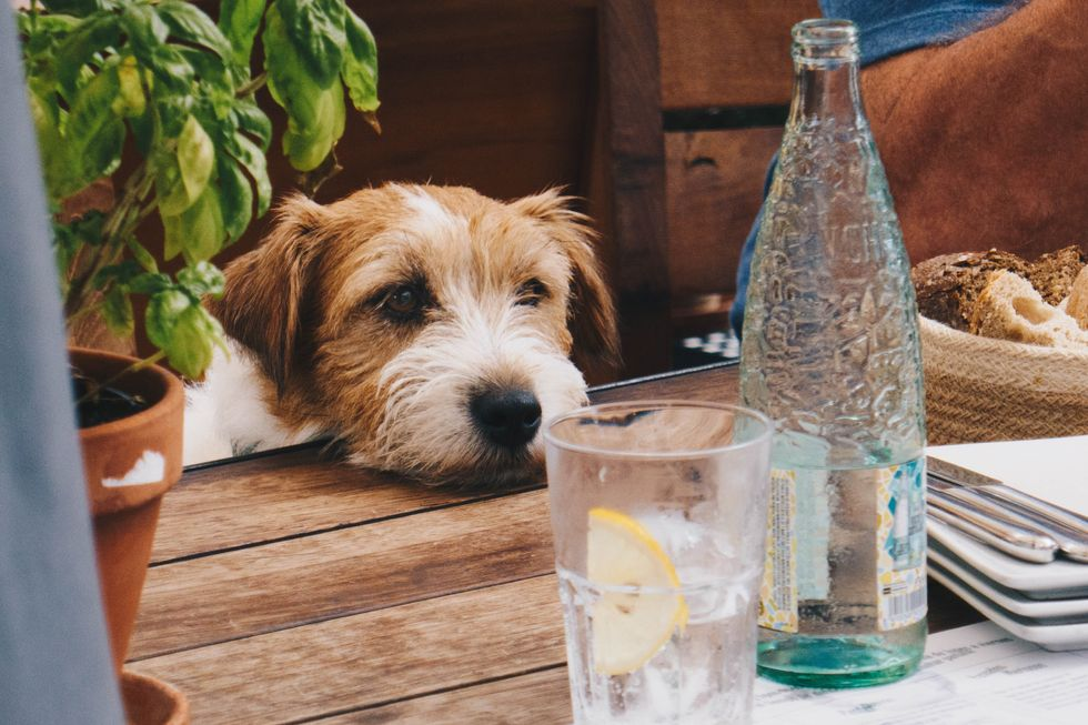 I Know You've Heard It Before, But You Should Drink More Water