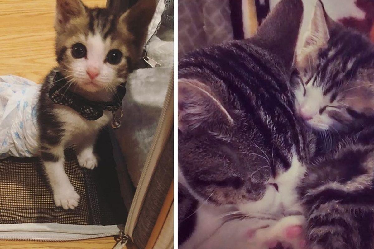 Kitten Who Lost Use of Back Legs, Now Moves Faster Than Other Cats and Helps Kitties in Need