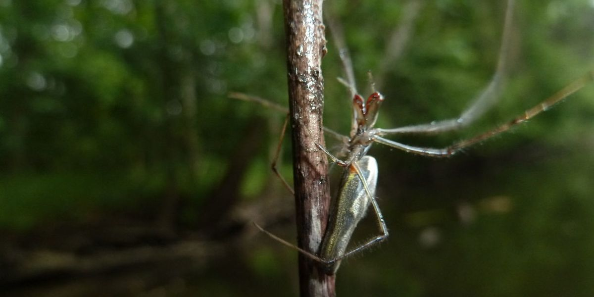 Bugs are full of our drugs—and they could be getting other critters hooked, too