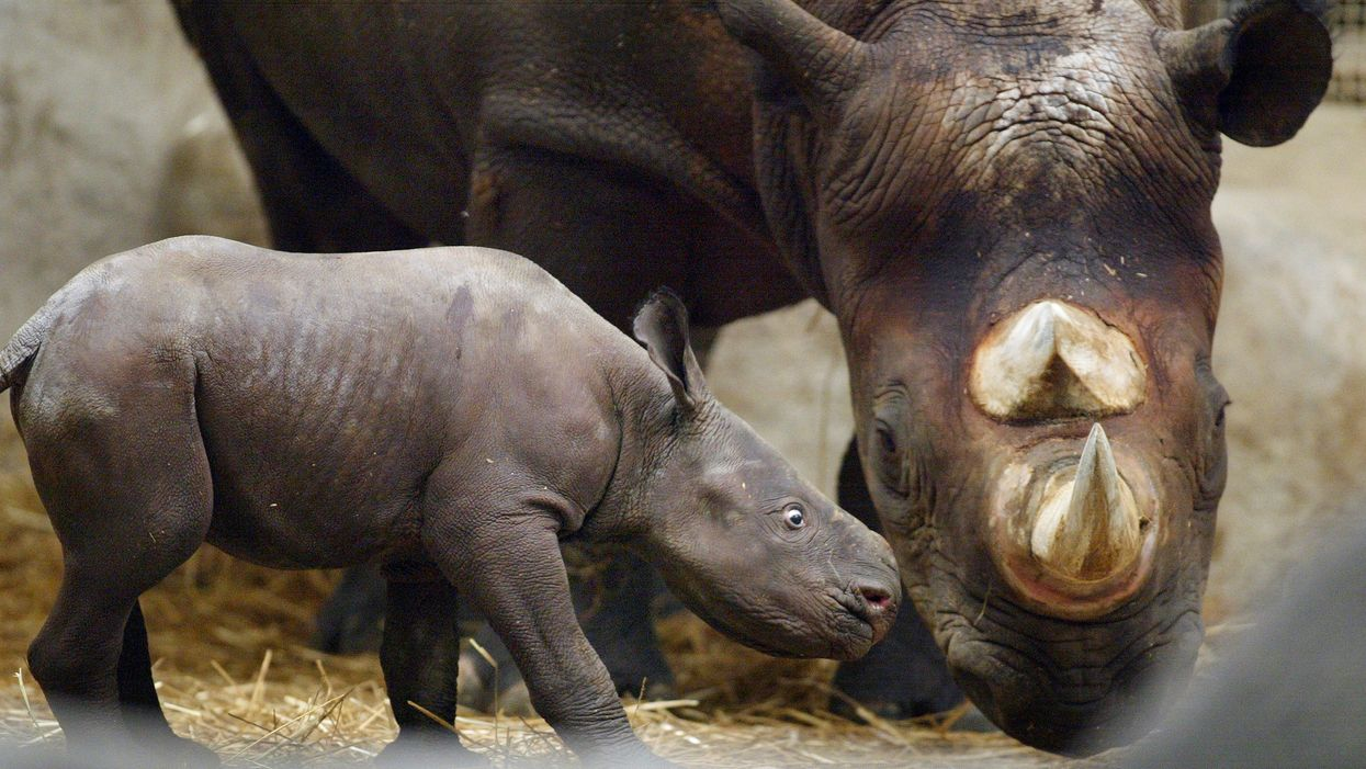 Capitalism is killing the world's wildlife populations, not 'humanity'