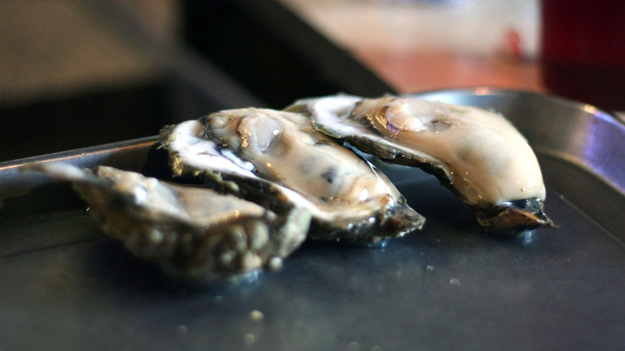 Hurricanes, Water Wars Threaten New High-End Oyster Industry on Gulf Coast