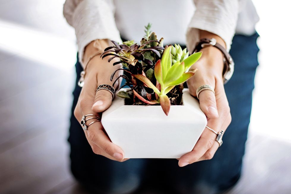 Succulent Parenting: Growing Indoors