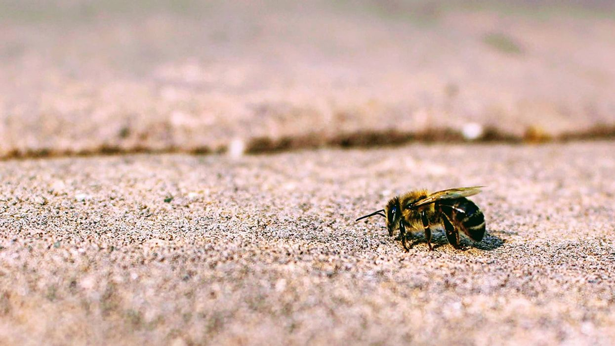 10 Things You Always Wanted to Know About Neonics