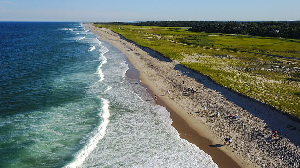Cape Cod's Gray Seal and White Shark Problem Is Anything but Black-and-White