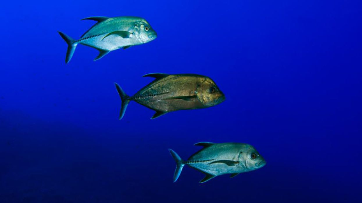 How Nutritious Is That Fish? To Find Out, Ask Its Relatives