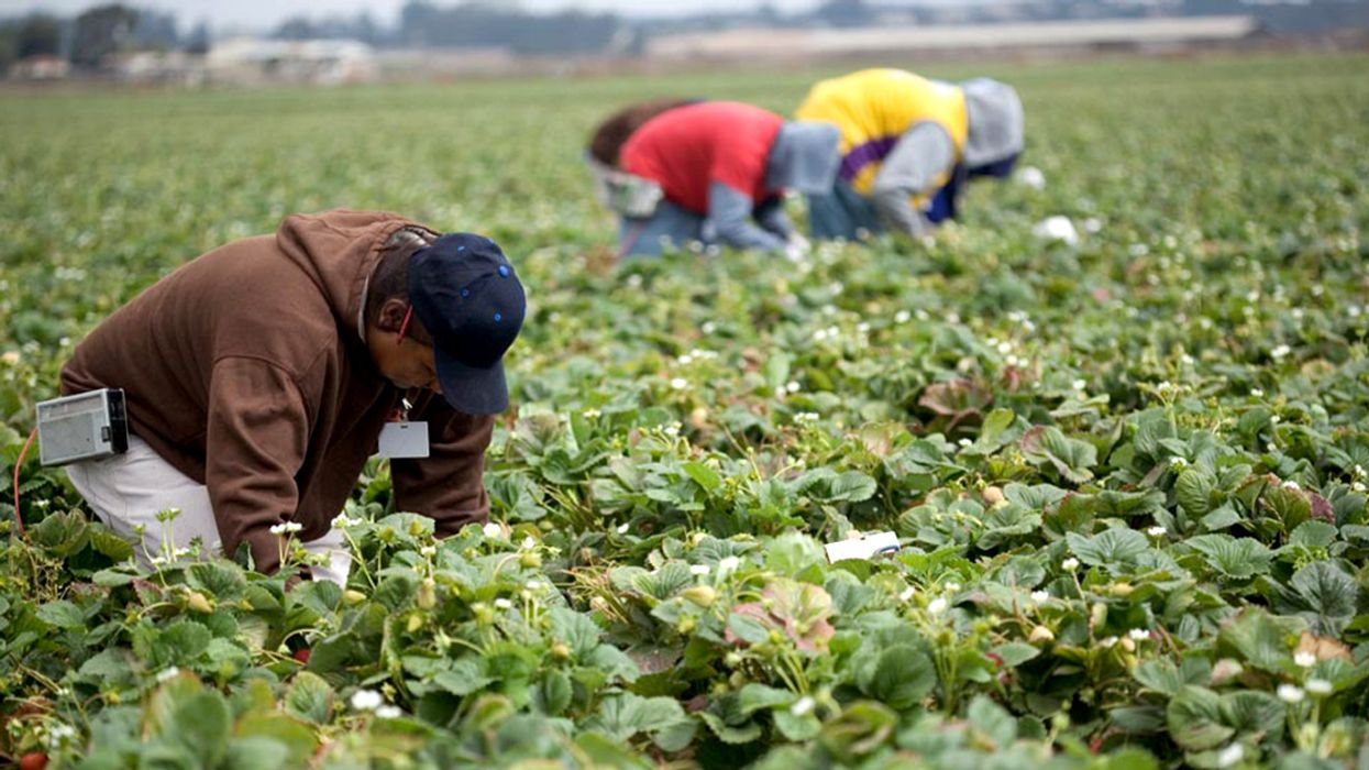 200+ Groups Call on Senate to Reject 'Pesticide Industry Loyalist' as USDA's Top Scientist