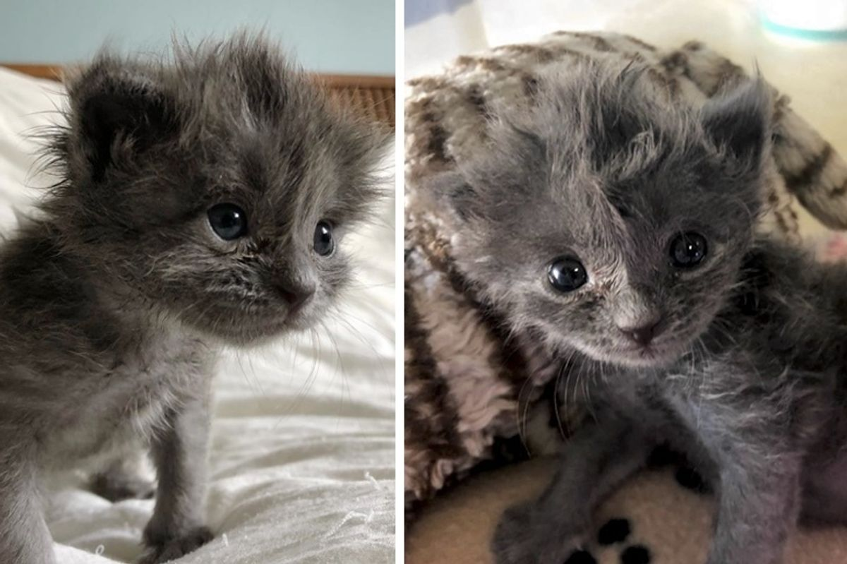 Kitten Found All Alone Just Days Old, Bounces Back and Grows a Fluffy Hairdo