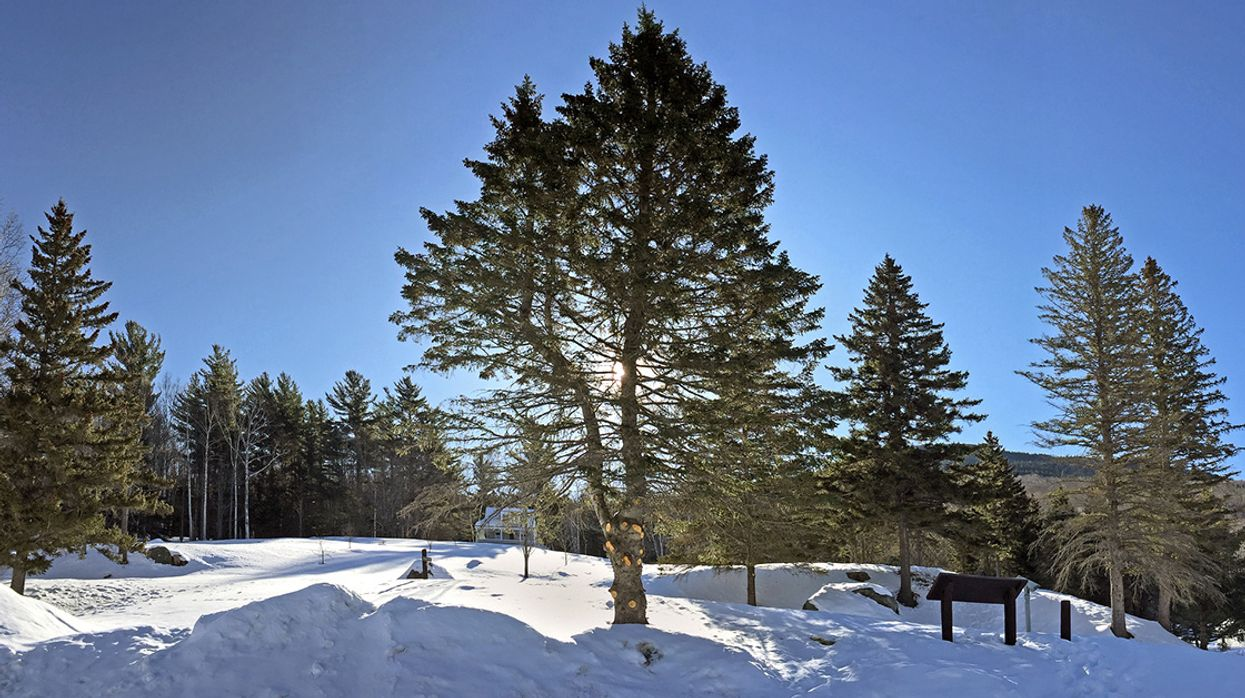 Climate Change Is Shrinking Winter Snowpack and Harming Northeast Forests Year-Round