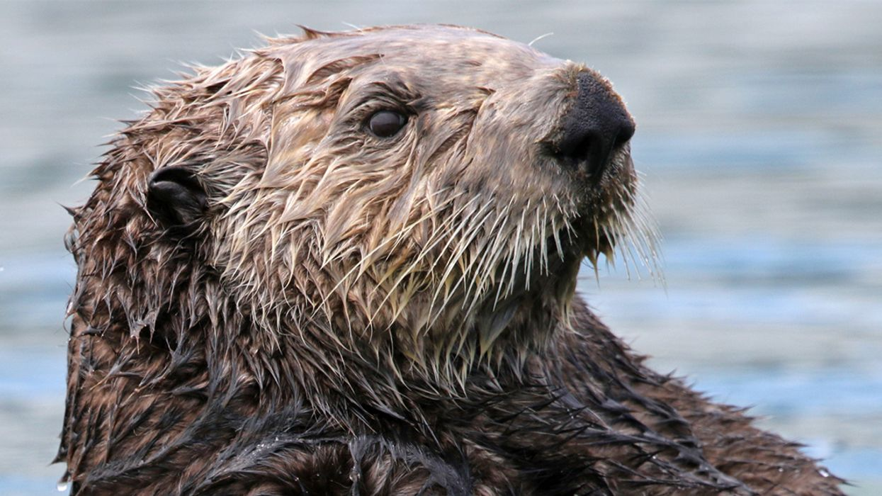 Otters, Polar Bears and Abraham Lincoln: The Best New Environmental Books of December
