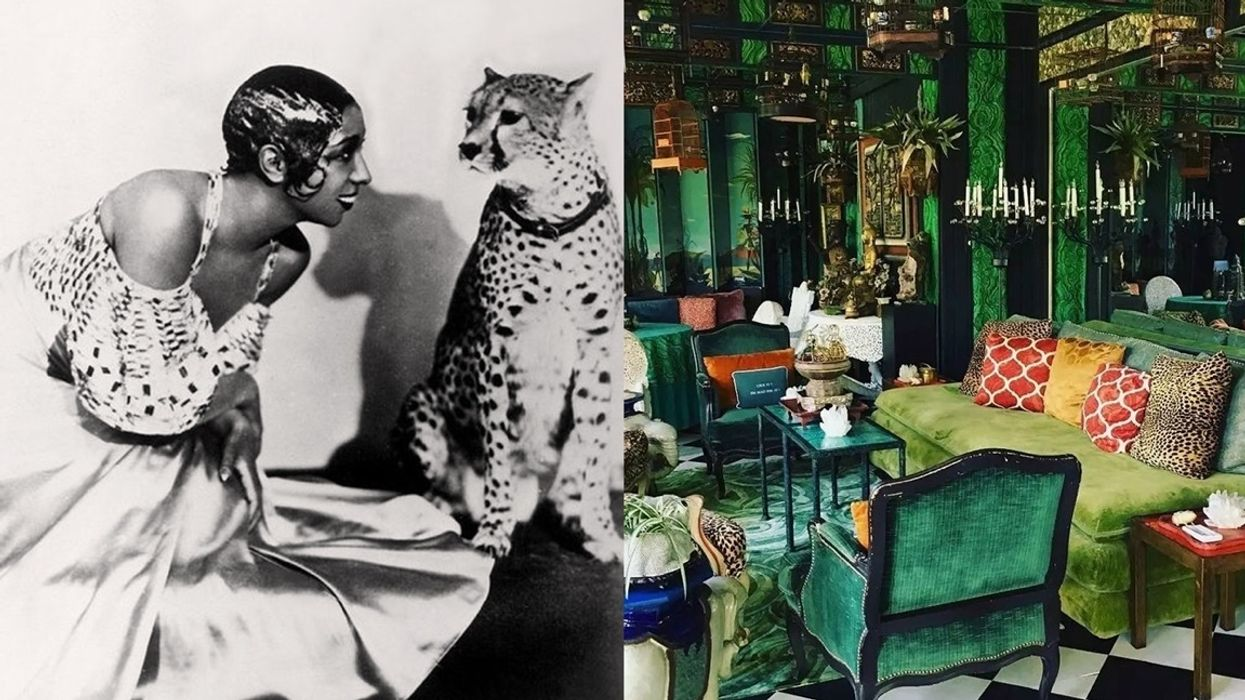 The Ultimate Decorating Guide to Leopard vs  Cheetah Print