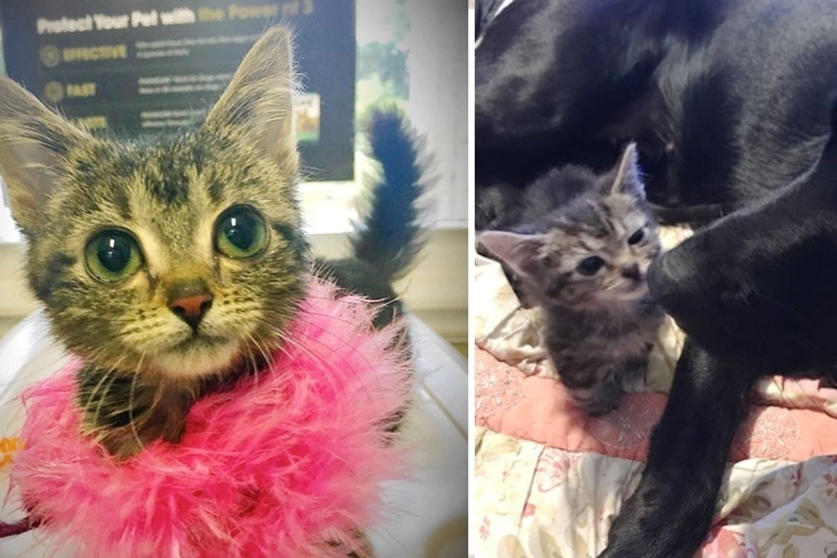 Woman Saves Kitten Who is Forever Tiny, and Turns Her Life Around