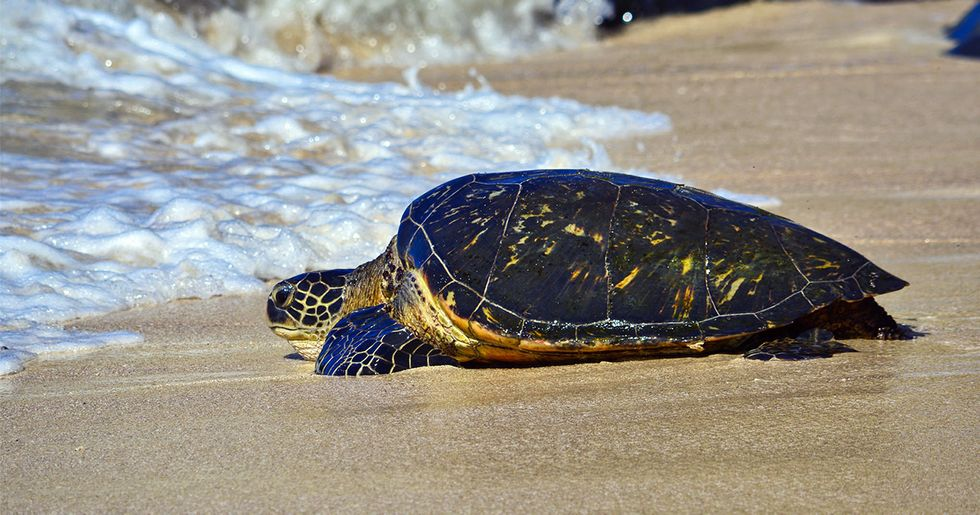 100% of Sea Turtles in Global Study Found With Plastics in Their Bellies