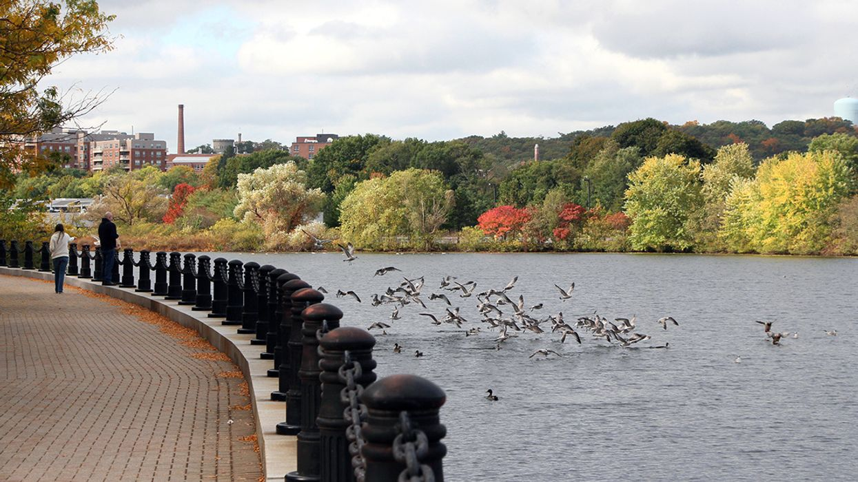 Mysterious Oil Spill on Massachusetts' Charles River Spurs Major Emergency Response