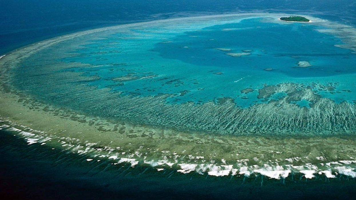 Scientists Discover 'Most Diverse Coral Site' on Great Barrier Reef