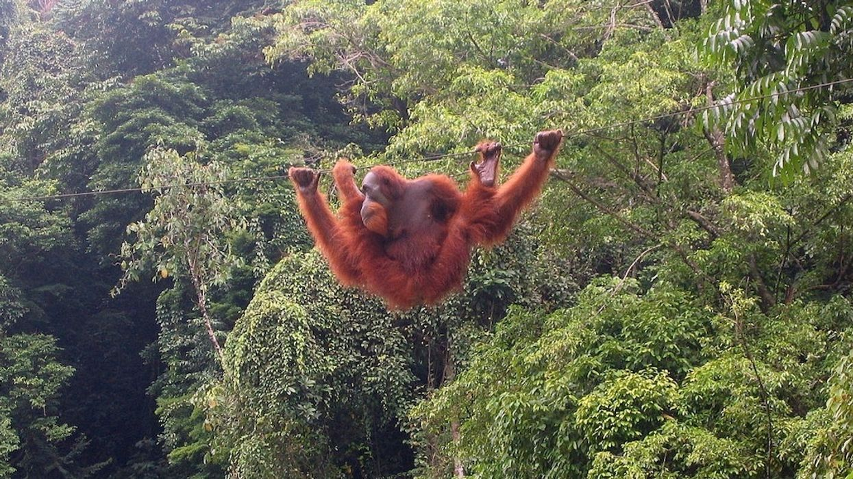 Norway to Ban Deforestation-Linked Palm Oil Biofuels in Historic Vote