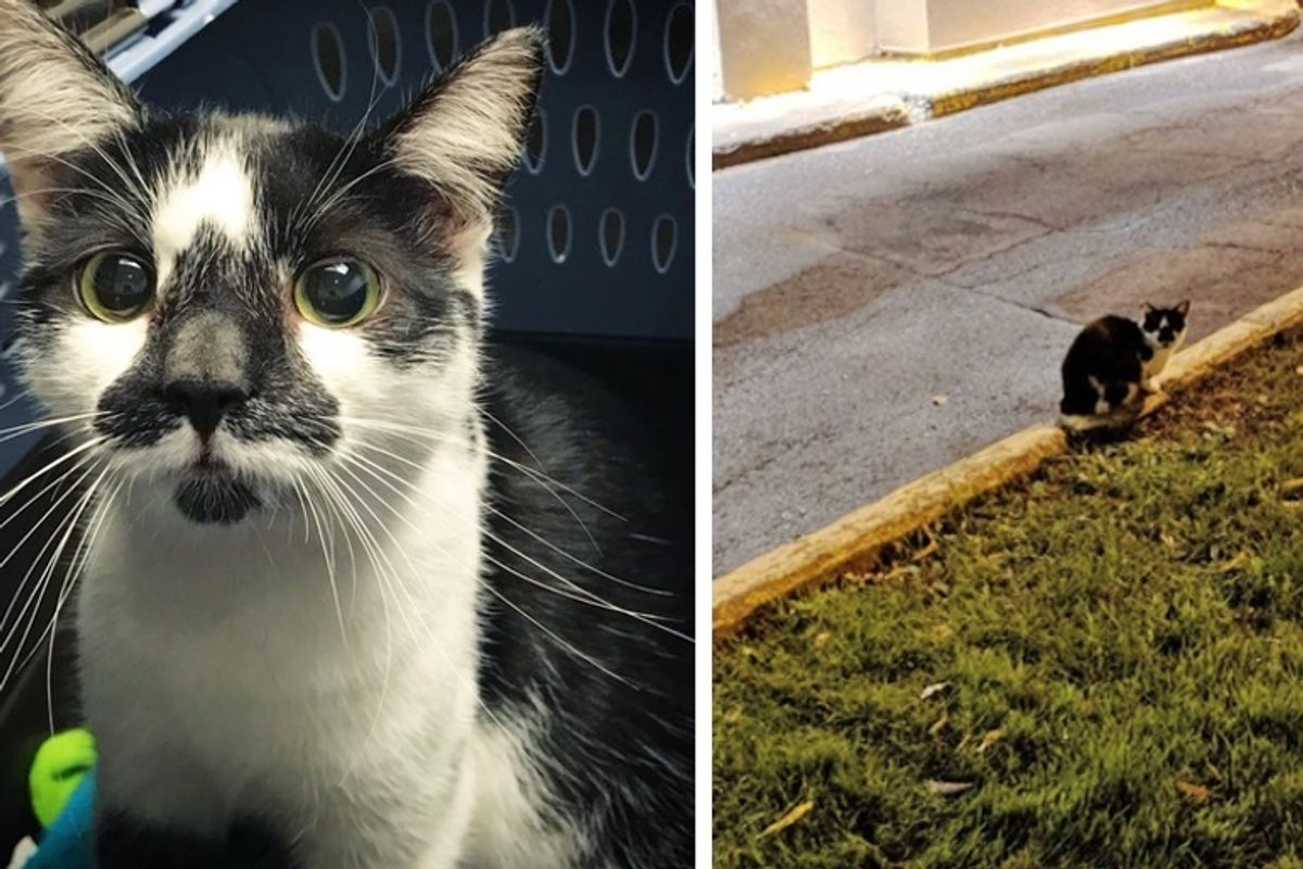 Man Saved Stray Cat and Her Kittens Just In Time Before Bitter Winter Hit Parking Lot