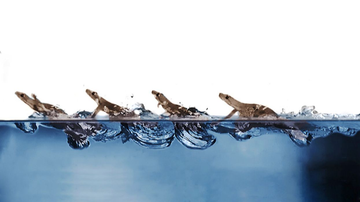 The next amazing trick we can learn from geckos