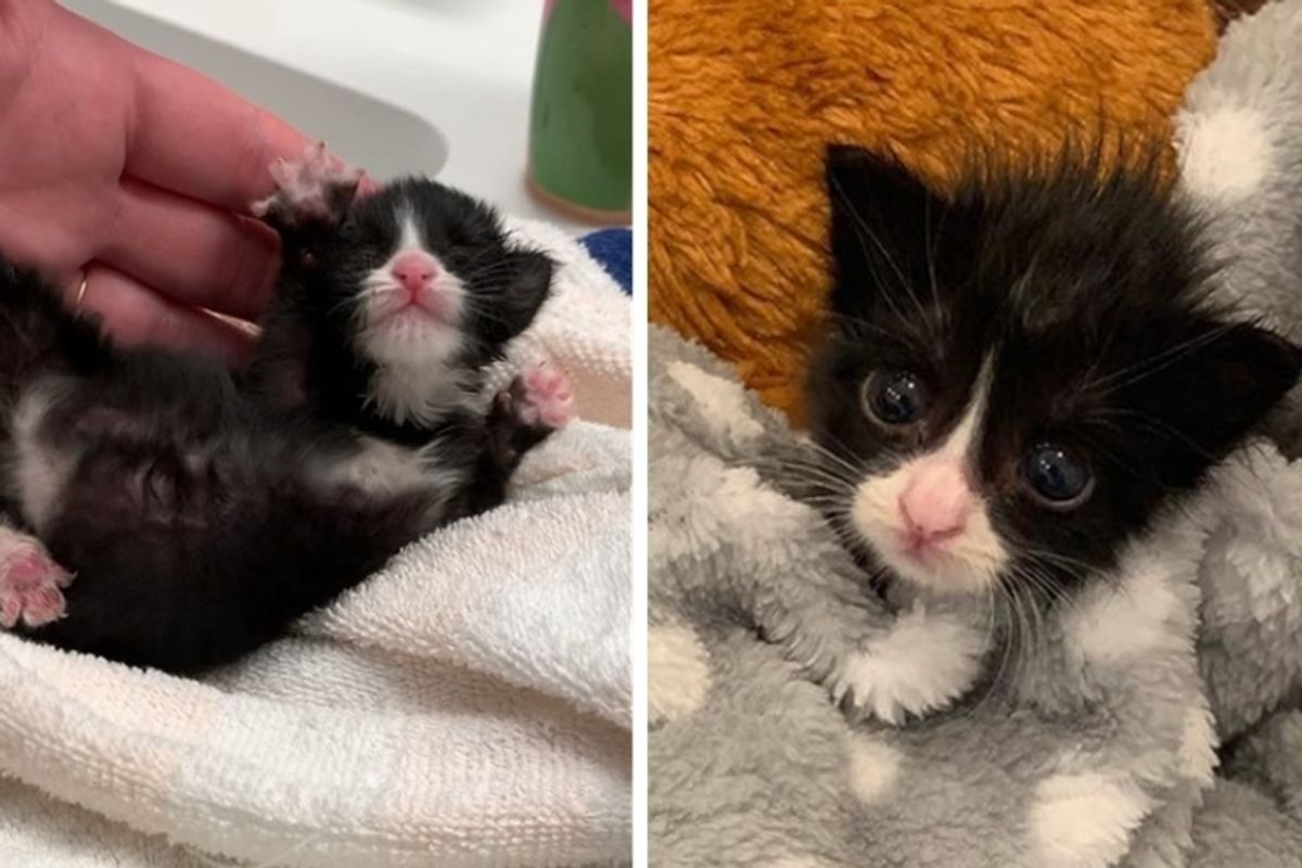 Kitten Found Abandoned in a Park, Never Gives Up Despite Having Everything Against Her