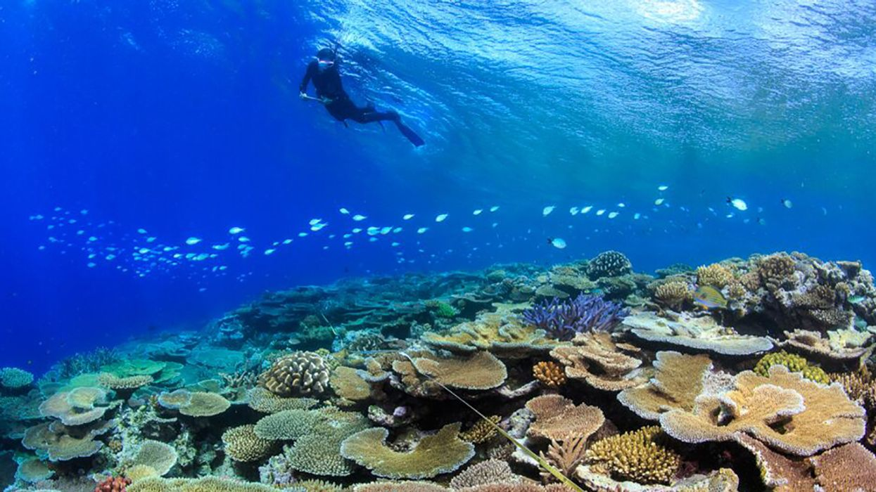 Great Barrier Reefs Resist Back-to-Back Bleaching Events Through 'Ecological Memory'