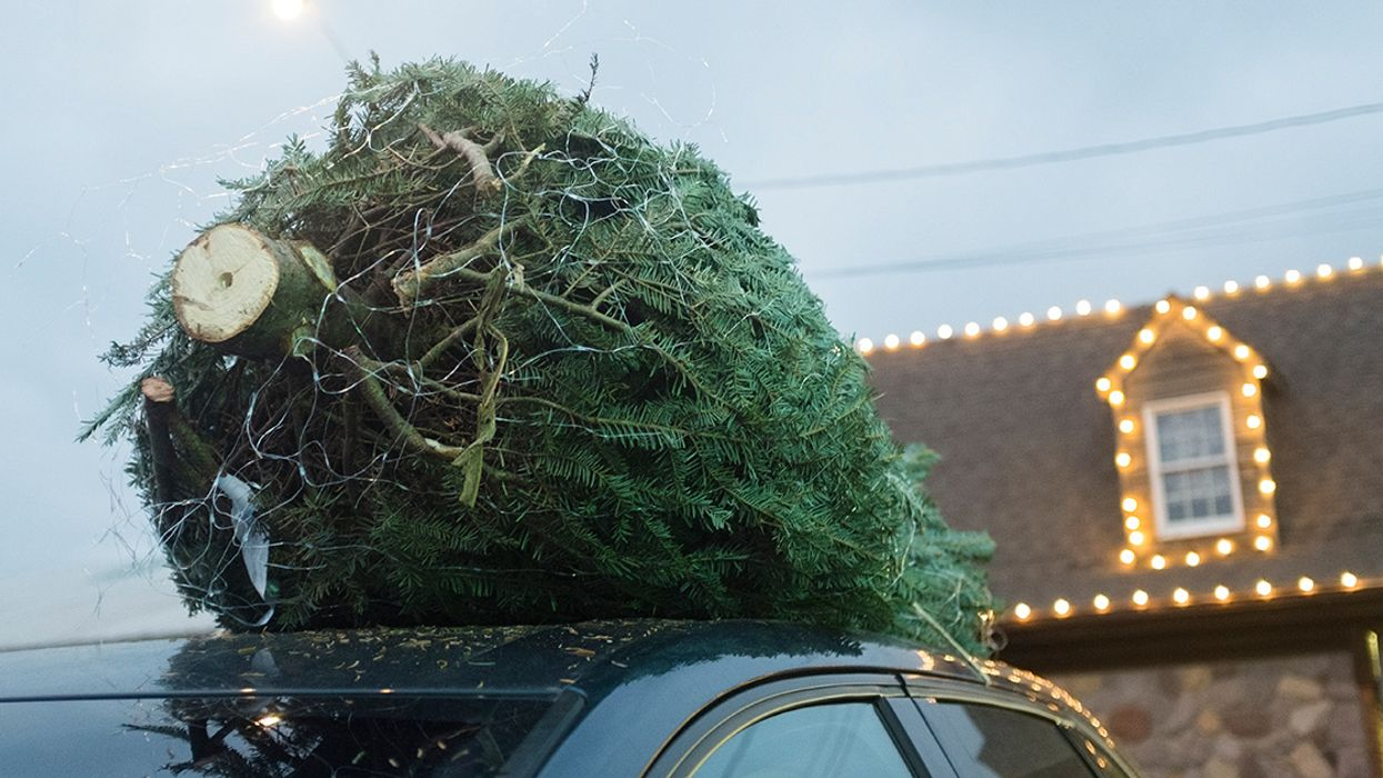 Don't Stress About What Kind of Christmas Tree to Buy, but Reuse Artificial Trees and Compost Natural Ones
