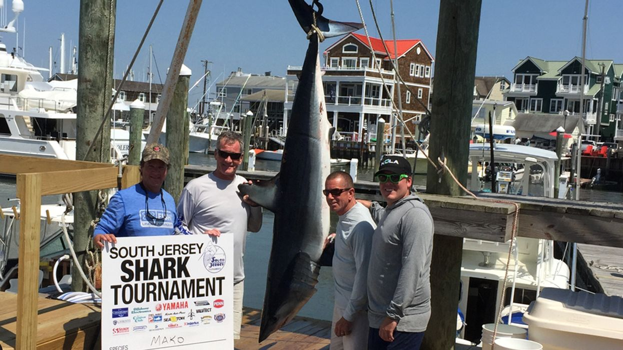 Shark Fishing Tournaments Devalue Ocean Wildlife and Harm Marine Conservation Efforts