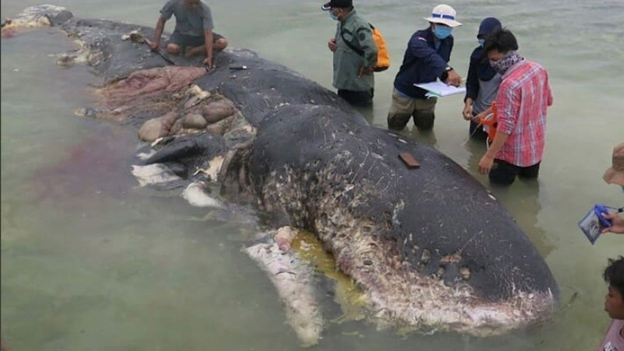 13 Pounds of Plastic Found in Dead Sperm Whale