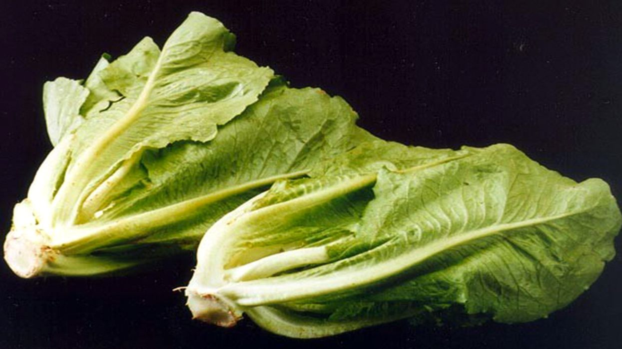 E. Coli Outbreak Linked to Romaine Lettuce