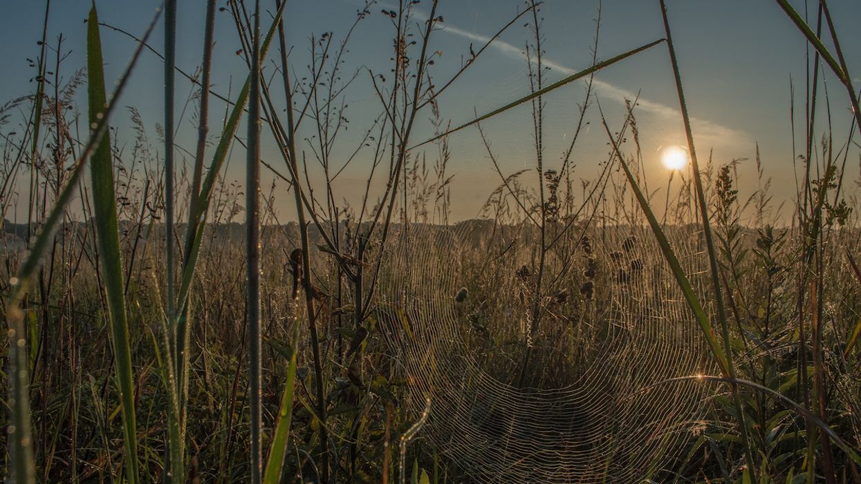 'Everything Is Interconnected': Photo of Radiant Spider Web Wins EcoWatch Contest