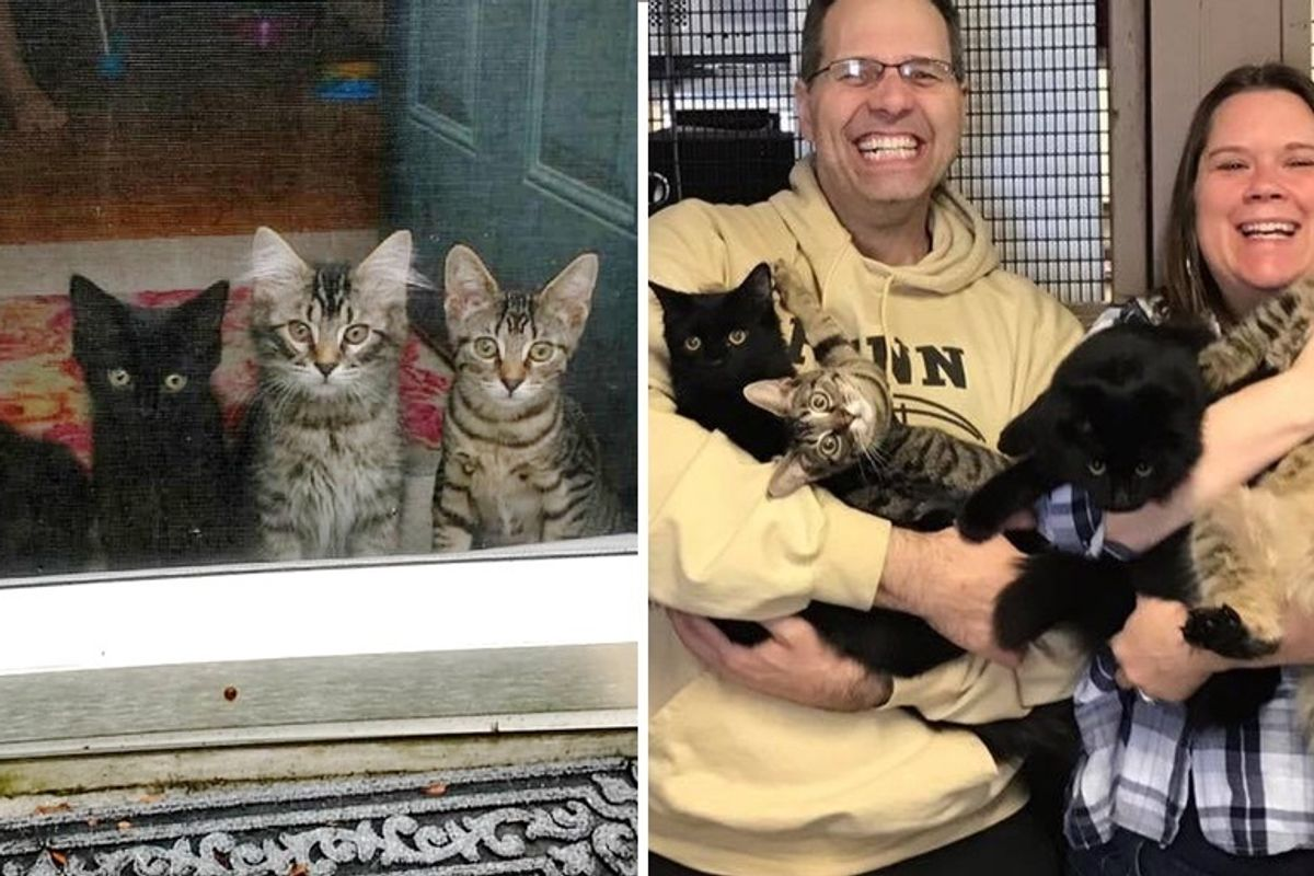 Couple Agreed to Foster 4 Kittens Without a Mom But the Kitties Had Their Own Plan