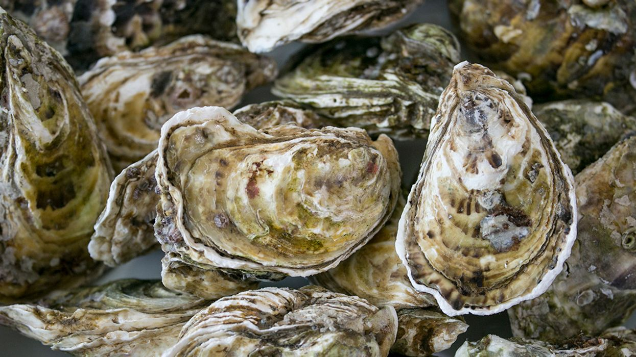 The Gulf Oyster Situation Is Very Bad, But There's Hope