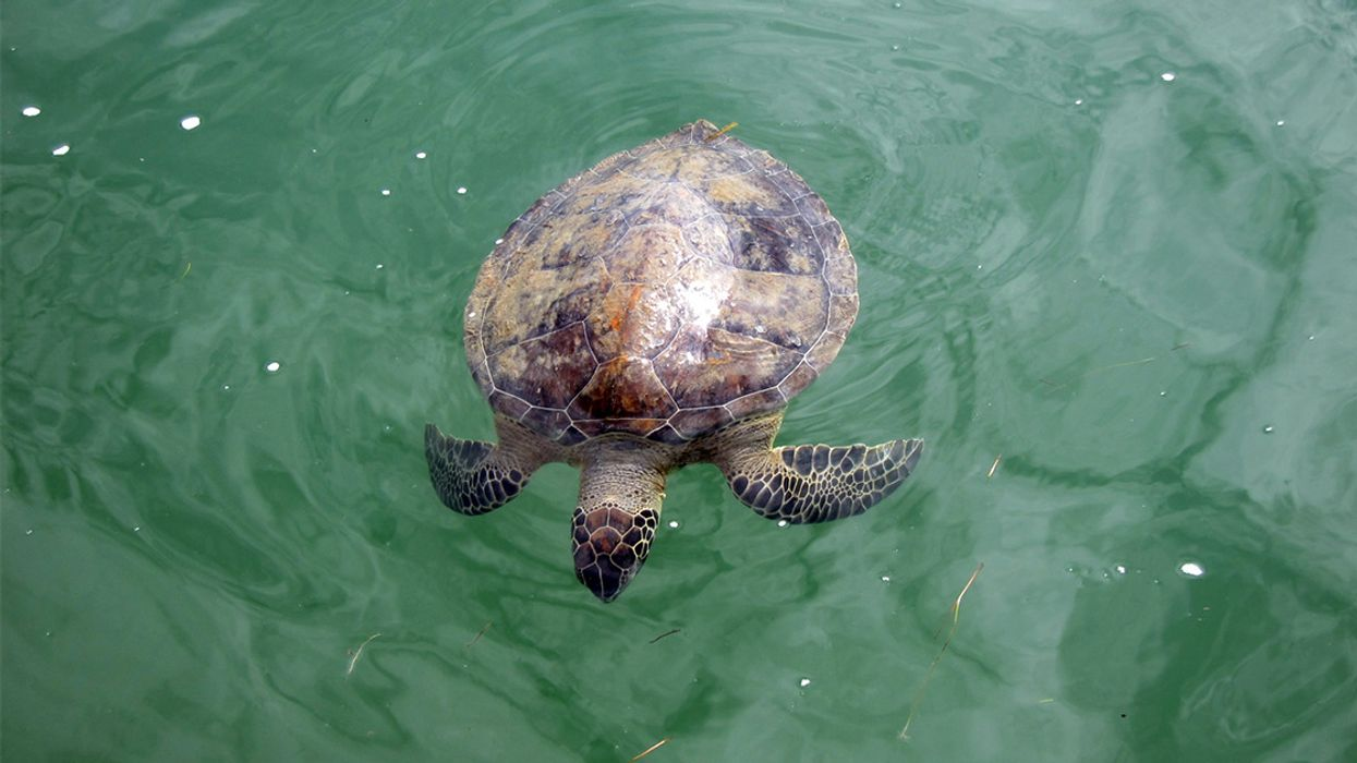Nearly 200 Sea Turtles Die in Cape Cod Cold Snap