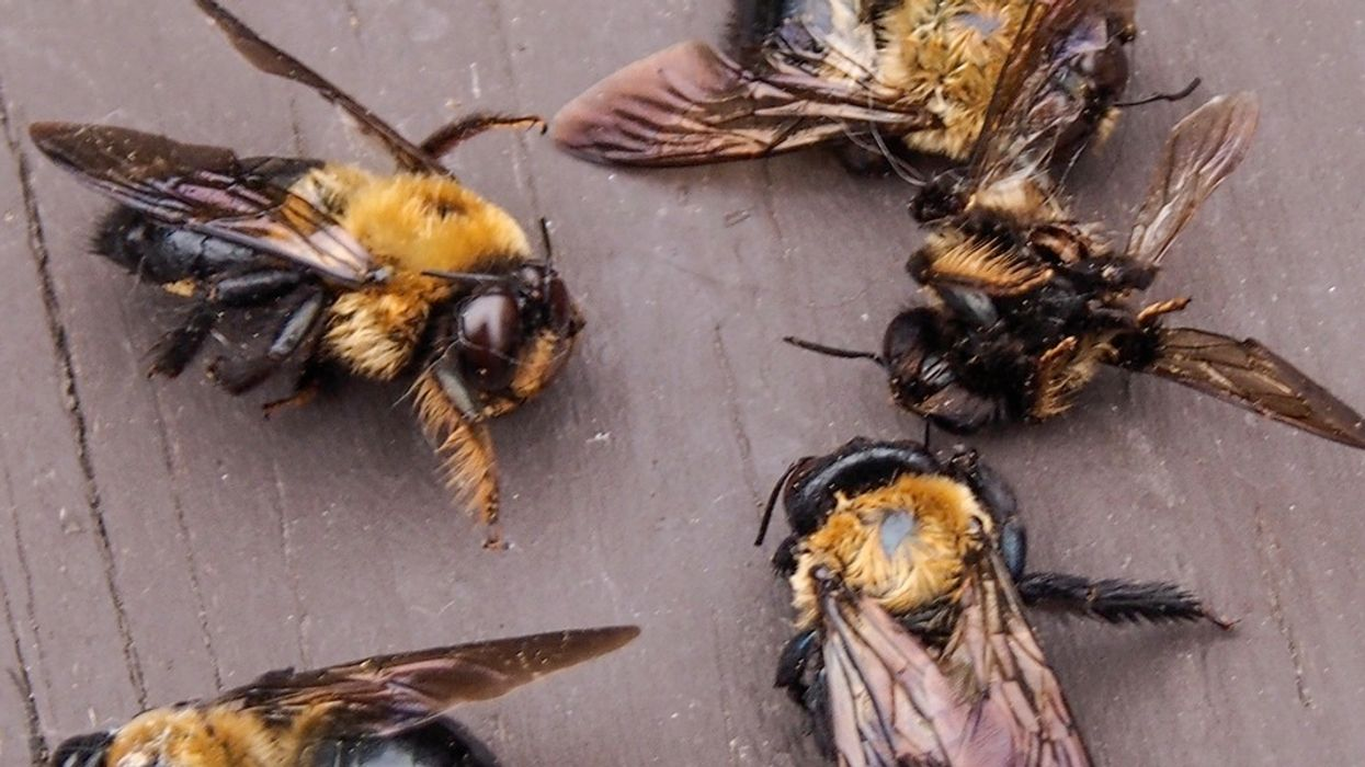 At Least 1 Million Bees Found Dead in Cape Town