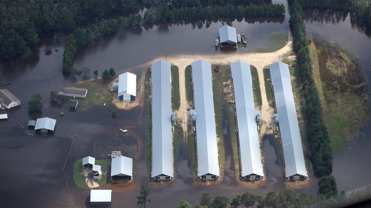 Hurricane Florence Flooded Poultry Operations Housing 1.8 Million Birds, Investigation Finds